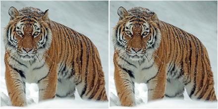 De Puzzelmaker puzzel Puzzels Denksport zoek de verschillen tijger